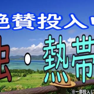楽市楽座イオンモール福岡伊都店 CM 生き物ver.
